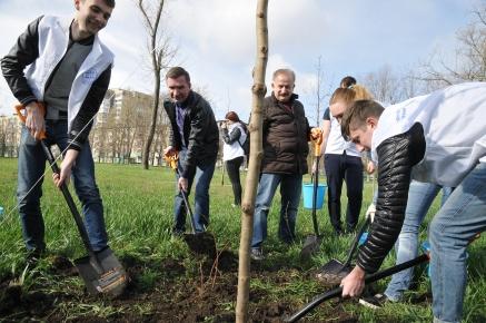 Более 120 тысяч деревьев и кустарников высадили на территории Ростовской области